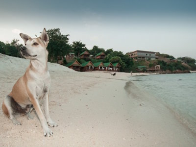 "Cinco estupendas playas para disfrutar con tu perro de unas vacaciones ""pet friendly"""