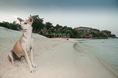 """Cinco estupendas playas para disfrutar con tu perro de unas vacaciones """"pet friendly"""""""