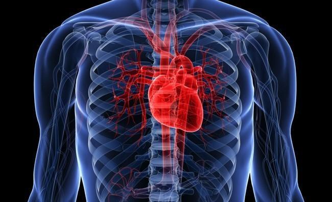 Las células del corazón humano laten incluso injertadas en un microchip