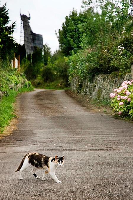 Like Dogs Como El Perro And Cats Y El Gato 1