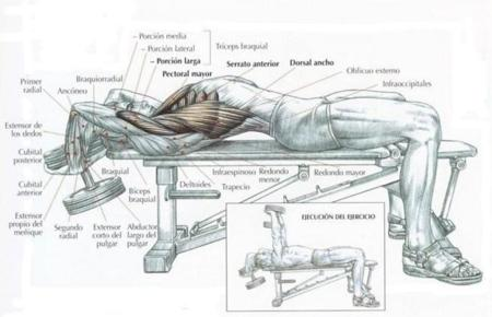 Press pullover: la sentadilla del tren superior