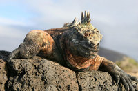 Cómo viajar a las Islas Galápagos por tu cuenta