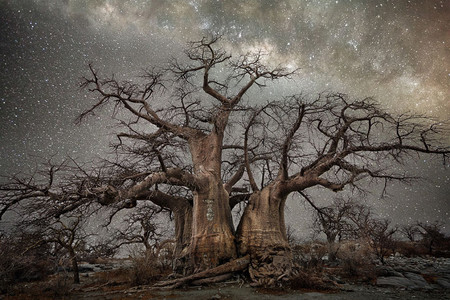 Diamond Nights Beth Moon 8
