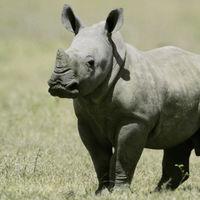 Hacer más con menos: los países más pobres son los mejores conservando la megafauna del planeta