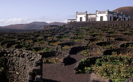 Lanzarote: viñas sobre tierra volcánica