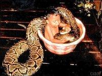 Niños que luchan con serpientes como reclamo turístico