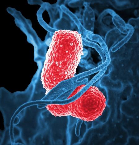 Bacteria 811861 1920