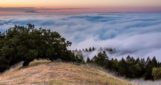 Mount Tamalpais Fog Timelapse