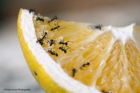 ¿Sabes los contaminantes que están permitido en tu comida?