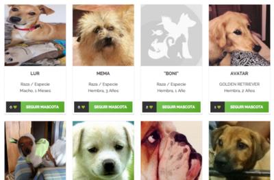 WebAnimales quiere unir en una red social todo lo que necesitas saber de tu mascota