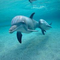 Prohiben en Ciudad de México el uso de delfines en espectáculos y terapias