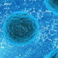 Nuevos medicamentos de vanguardia contra la infección y la inflamación de las heridas