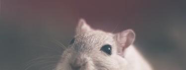 ¿Cuántos animales se sacrifican por experimentación científica?