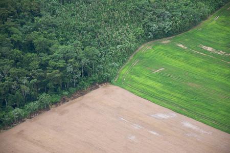 Bolsonaro Amazonas 6