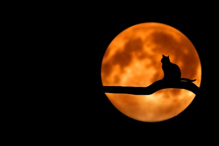 cuentos-halloween