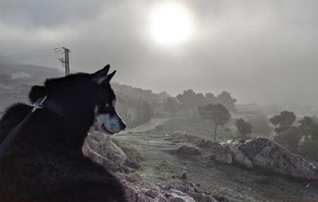 Thor Niebla