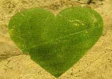 Compra un árbol en Nigeria para tu bebé