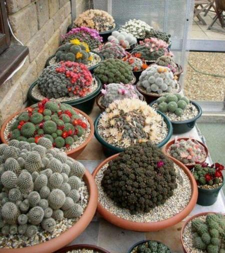 Cool Garden Cactus