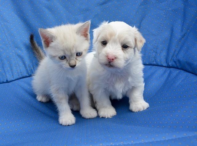 Cachorro de gato y cachorro de perro.