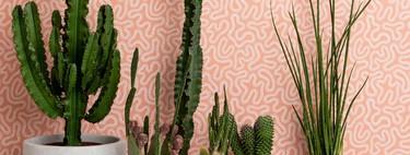 Formas geométricas y vegetales, las claves de la nueva colección de papeles pintados de Missprint