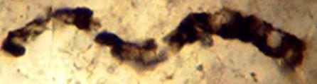 Bill Schopf Fossil Image 2 2017 B9954580 302e 461e Aaf8 0b89d4483e6f Prv