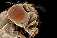 El aprendizaje de las moscas (I)