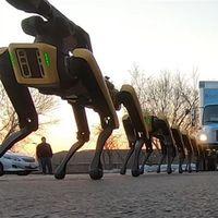 Estos 'perros robóticos' de Boston Dynamics arrastran son tan fuertes que arrastran camiones