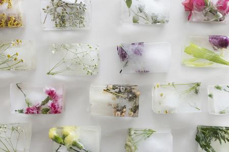 Hielo Flores
