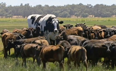 Se ha encontrado una mastodóntica vaca de 1,94 metros y 1.400 kilos. En Australia, por supuesto