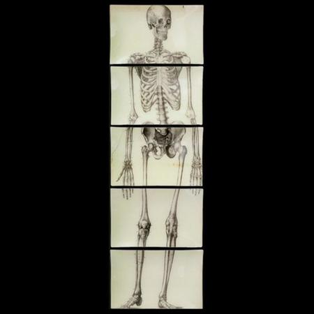 Wall Skeleton Front Set 2 Large