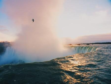 Niagara Falls Canada Seagull 90315 990x742