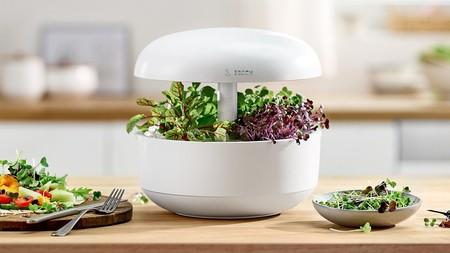 ¿Pensando en cultivar en casa hierbas aromáticas, tomates o incluso aguacates? No te pierdas esta selección de huertos urbanos
