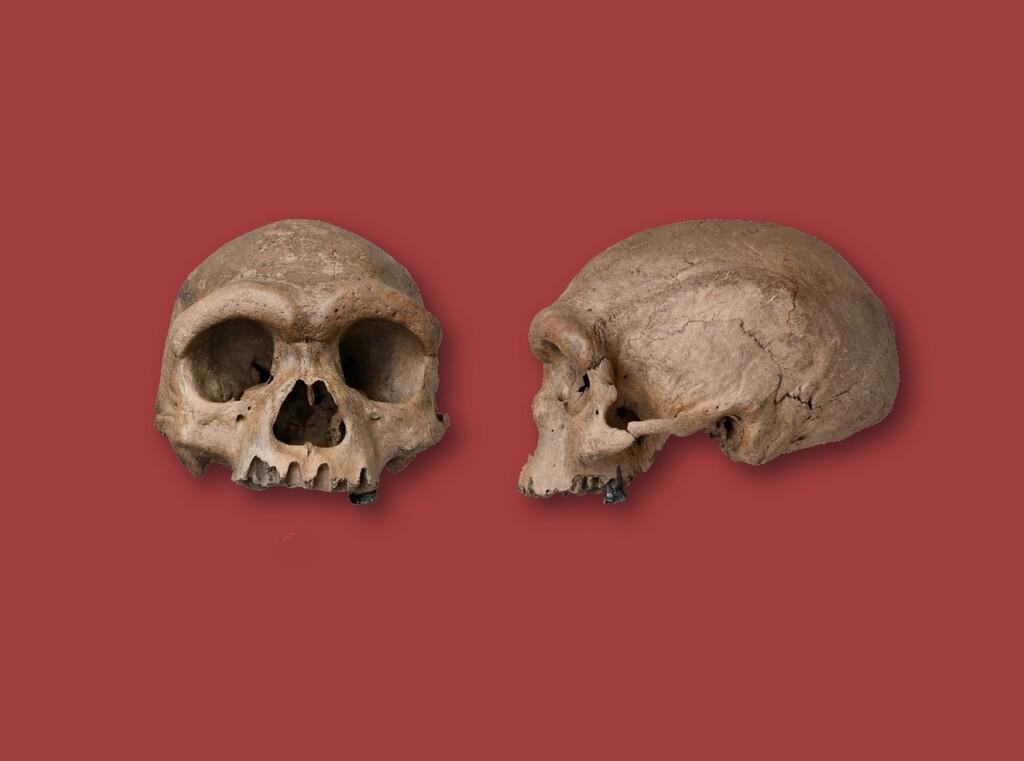 Descubren una nueva especie de humano: el 'Homo longi' apunta a ser nuestro relativo más cercano en el árbol evolutivo humano