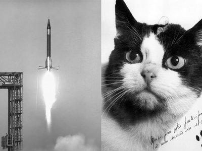 En París se construirá una estatua del único gato que fue al espacio