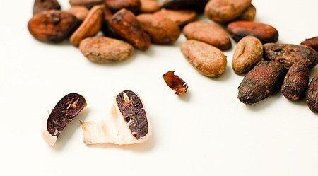 Se completa la secuencia preliminar del genoma del árbol del cacao