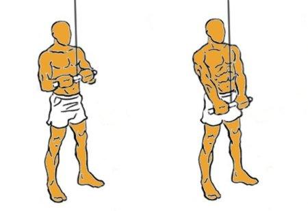 Guía para principiantes (XLVIII): Extensión de tríceps en polea alta