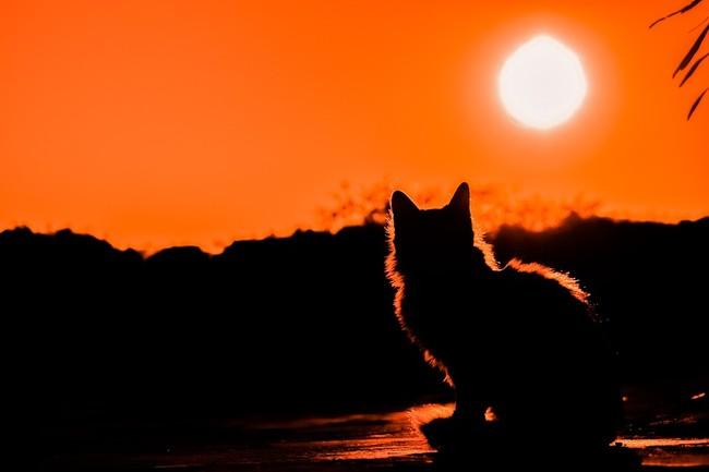 Sunset 3008779 960 720