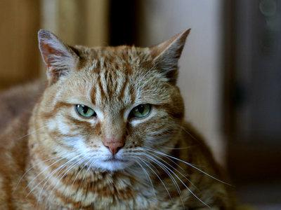 ¿Por qué hay gatos que tienen tan mal carácter?