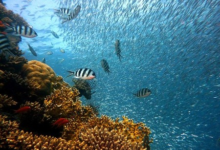 El cambio climático hará que el mundo sea un lugar demasiado caluroso para el 60% de las especies de peces