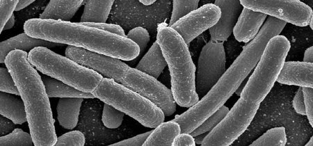 ¿Cuánto pesan los 39 billones de microbios que viven en nuestro cuerpo?