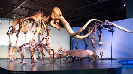 Museo Del Desierto