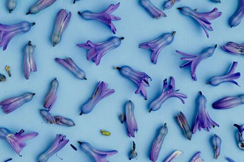 Cinco estilos que serán tendencia en 2021 para la fotografía de naturaleza muerta según Shutterstock