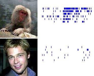 Brad Pitt no es un animal peligroso