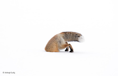 Stuck In Ashleigh Scully Wildlife Photographer Of The