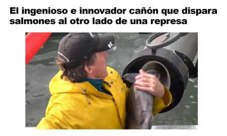Canon Salmon