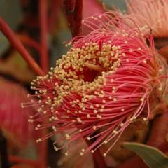 Foto 13 de 22 de la galería colores-del-gran-desierto-de-victoria en Xataka Ciencia