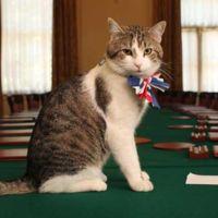 Larry el gato mantendrá su cargo en Downing Street (y no es el único felino con un trabajo así)