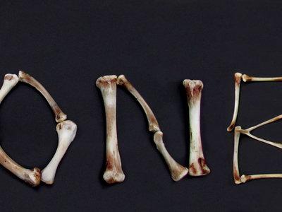 Así se comunican nuestros huesos con el cerebro