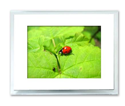 Marco de fotos digital Leotec de 10.4 pulgadas