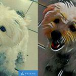 La beta de Prisma, la aplicación de moda para añadir efectos artísticos a fotos, ya en Android [APK]
